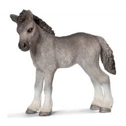 Poulain-poney-Fell