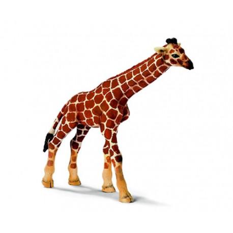 Bébé-girafe