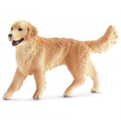 Golden Retriever femelle