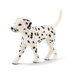 Chien Dalmatien mâle