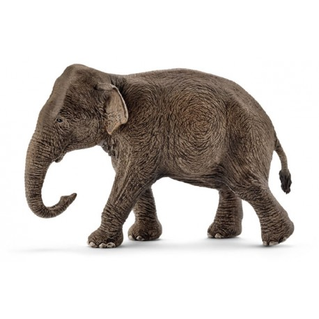 Eléphant d'Asie femelle